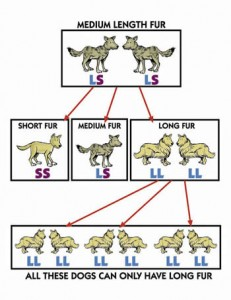 Natural Selection as a Mechanism for Evolution